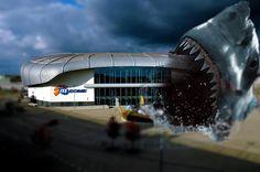 Derby in Düsseldorf. Haie Fallen in die Landeshauptstadt ein.