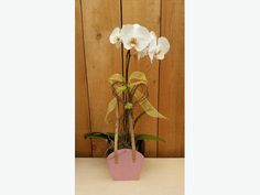 Mothers Day Orchids Planter Workshop