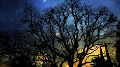 night, month, trees - http://www.wallpapers4u.org/night-month-trees/