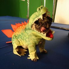 """""""Rawr. There, I said it. Do I get my treat now?"""""""