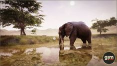 Elevate your workflow with the Animalia - African Elephant male asset from gim. Find this & other Animals options on the Unity Asset Store. Rhino Pictures, Unreal Engine, African Elephant, Game Art, Unity, Vietnam, Wildlife, Photoshop, Animation