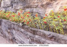 Plant in Cement wall with wood texture - stock photo