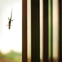 Luca Bovera - #fotografia - #Mostrami 3 e 4 http://www.mostra-mi.it/main/?p=979
