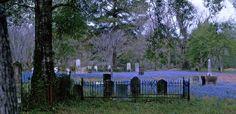 Bluebonnets & Indian Paintbrush in Old Settlers Cemetery -- Livingston, Texas