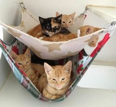 Cat hammock can be one of the best pleasurable furniture for your cats. Find the most creative cat hammock that will make more comfort unpredictably. Cool Cats, I Love Cats, Diy Cat Hammock, Gatos Cool, Cat Room, Diy Stuffed Animals, Crazy Cats, Cats And Kittens, Kitty Cats