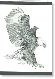 Bald Eagle In A Dive Greeting Card by Robert Wilson
