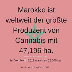 Wusstet ihr schon, dass Marokko der weltweit größte Produzent von Cannabis ist?  Cannabis Hanf Hemp Weed Marijuana Marihuana