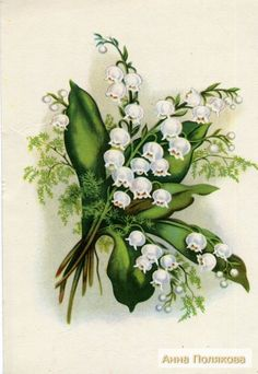 Items similar to Lily of the Valley Flowers, Landysh, Vintage Russian Postcard with mark unused print 1956 on Etsy Lily Of The Valley Bouquet, Tattoos Mandala, Etiquette Vintage, Vintage Wedding Cards, Rose Lily, Birth Flowers, Spring Art, Arte Floral, Purple Roses