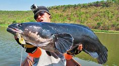 26 lb giant snakehead... IGFA world fishing record | Outdoor Channel