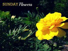 Sunday Flowers @ ♥ ro thru life ♥