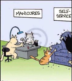 Cat manicures funny