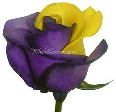 Purple Yellow Rose | Bulk Fresh Cut Rainbow Roses