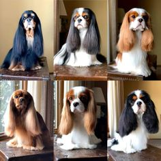 """Awesome """"cocker spaniels"""" info is offered on our internet site. Read more and you wont be sorry you did. Perro Cocker Spaniel, Cavalier King Spaniel, Spaniel Puppies, King Charles Puppy, Cavalier King Charles Dog, King Charles Spaniel, Roi Charles, Cute Dogs And Puppies, Doggies"""