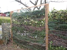 """Compost fence     """"To build the fence, they sunk 4x6x8 posts two feet into the ground, stapled wired mesh between the posts on either side, and then sandwiched in layers of sticks, tree and shrub trimmings, pine boughs and needles, eucalyptus, holly, and other evergreen leaves. -digginfood.com"""