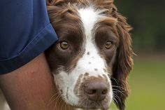 Trainee search dog Max takes a break from training for a reassuring cuddle from his handler.    The Force's Tactical Dog Unit provides specialist search dogs trained to search for objects including drugs, cash and explosives.       For more information about the work of Greater Manchester Police's dogs please visit our website.  www.gmp.police.uk