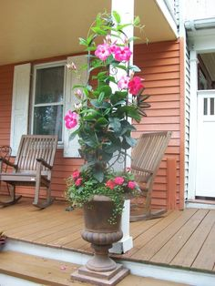 An urn, narrow trellis, mandevilla vine planted with new guinea impatiens and wire vine at the base.