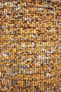 Corn crib full of corn Country Farm, Country Life, Country Roads, Fall Harvest, Autumn, Corn Crop, Farm Humor, Grain Storage, Farm Pictures