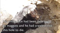 This Dog's Face Was Eaten By Maggots, See The Transformation Now