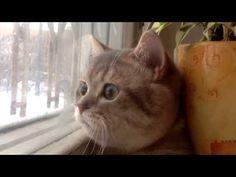 Cat Talking While Bird Watching