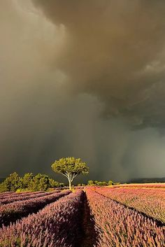 After the storm in Provence, France.                                                                                                                                                                                 More