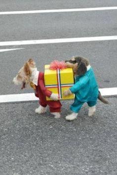 ★犬のコスチューム 犬にもコスチュームがあるんだ。 おもしろいでしょ。 ぼくたちの演技を見てね。