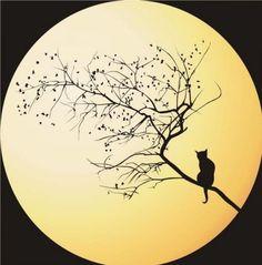 Luna gato