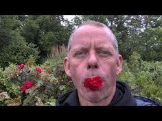 Rosenstecklinge - Steckholz - Rosenvermehrung - Anleitung - YouTube