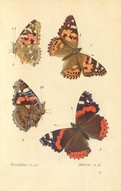 papillons d 3
