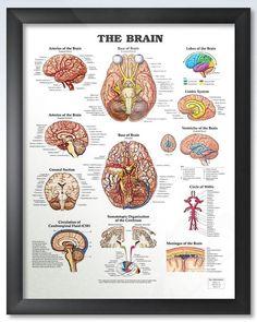 Framed The Brain anatomy poster