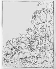 Ideas For Flowers Drawing Doodles Inspiration Coloring Pages drawing flowers is part of Flower drawing - Watercolor Flowers, Watercolor Paintings, Floral Drawing, Drawing Flowers, Pencil Drawings Of Flowers, Flower Sketches, Doodle Inspiration, Flower Coloring Pages, Fabric Painting