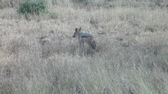 n Jackel standing near Impala's