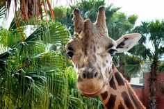Randle_Lowery Park Zoo, Tampa. He appears a bit dubious...
