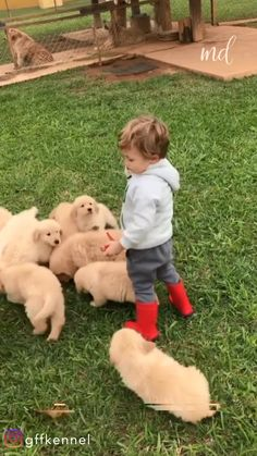 When your yard is some kind of paradise By gffkennel Cute Funny Babies, Cute Funny Animals, Cute Baby Animals, Funny Cute, Cute Kids, Animals And Pets, Cute Baby Videos, Cute Animal Videos, Cute Animal Pictures
