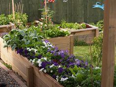 My Garden: Vegetables in New Zealand Garden Design Calimesa, CA