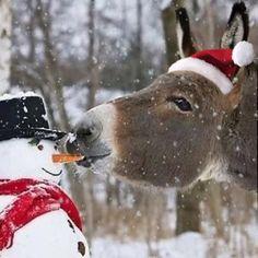 Winter Christmas Scenes, Merry Christmas Gif, Christmas Scenery, Peanuts Christmas, Christmas Mood, Christmas Animals, Christmas Music, Christmas Pictures, Christmas Greetings