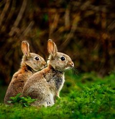 outdoormagic:  Two Rabbits by Elliot Cook  ♥