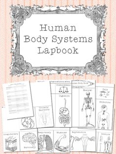 This is a lapbook set that includes materials to construct a lapbook about the 11 human body systems, cells and homeostasis. $