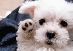 wittttle puppy
