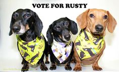 PLEASE VOTE FOR RUSTY
