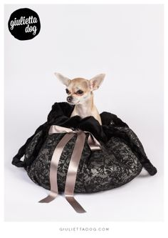 In the bag♥ #giuliettalovers #fashionchihuahua #inthebag #fashionconsultant #style #glam