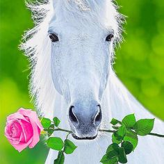 Cow, Horses, Animals, Animales, Animaux, Cattle, Animal, Animais, Horse