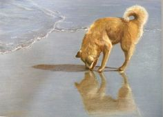 This is my most viewed pet portrait!  I think the shoreline really adds to it! www.robinzebley.com