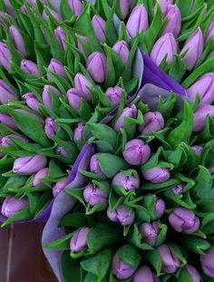 purple tulips..in memory of Karen's BD 5/27