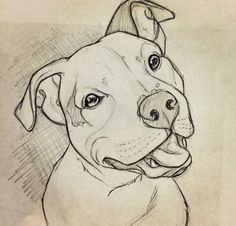 Animaldrawings hunde ideen neue pitbull zeichnen 65 neue ideen hunde zeichnen pitbull hunde zeichnen adorable drawings of dog breeds grouped by their place of origin Pencil Art Drawings, Easy Drawings, Drawing Sketches, Sketch Art, Drawing Tips, Drawing Ideas, Drawings Of Dogs, Cute Drawings Of Animals, Dog Drawing Tutorial