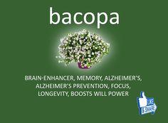 Amazing Benefits Of Bacopa (Brahmi)