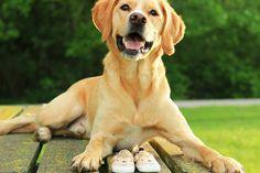||Maternity Photos with Pet Dog!||