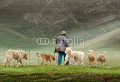 Pastorizia a Castelluccio di Norcia (Umbria, Italy) - Sheep with shepherd and dogs © Pietro D'Antonio