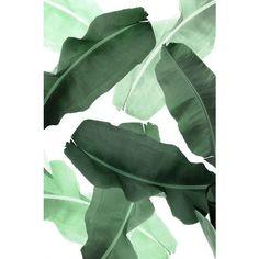 Tropical Print, Palm Leaf Print, Banana Leaf Print, Green Leaves,... ❤ liked on Polyvore featuring home, home decor, wall art, leaf wall art, leaf home decor, banana leaf wall art, green home decor and palm leaf wall art