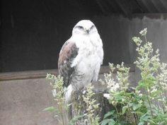 eagles flying sligo - Ireland