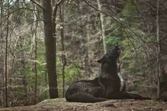 White Wolf : Women And Wolves Cuddle In Beautiful Photographs by Rachel Lauren